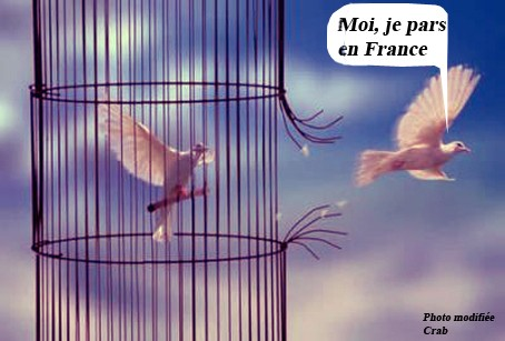 0 la liberté.jpg