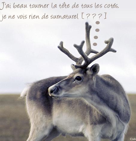 Caribou de péary.png